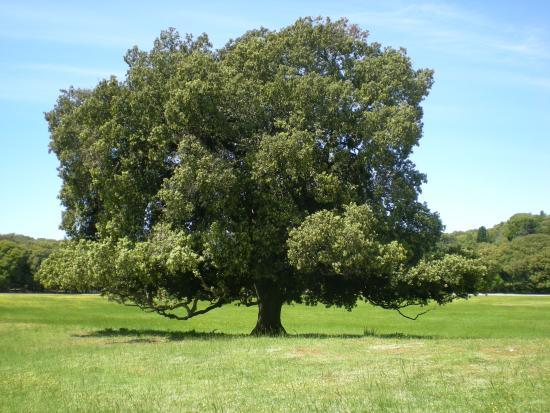 albero-maestoso[2]