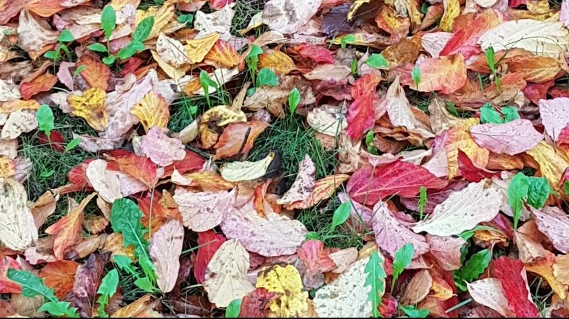 autunno-1.jpg