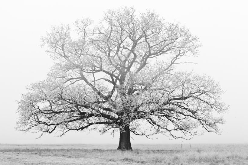 albero-inverno